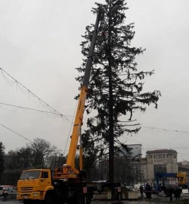 Українська компанія поверне Молдові гроші за зіпсовану при транспортуванні ялинку