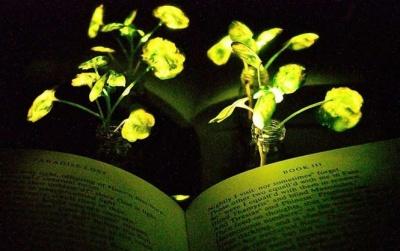 """У США створили """"гібриди"""" рослин і світлячків"""
