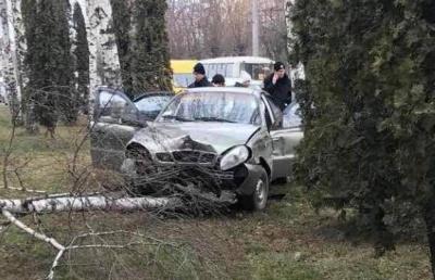 У Чернівцях «Ланос» врізався в березу на обочині вулиці: очевидці показали фото ДТП