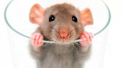 У США скасували рейс через пацюка на борту