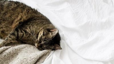 Чому денний сон шкідливий: пояснення експерта