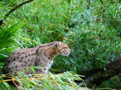 У 2017 році вимерли три види тварин