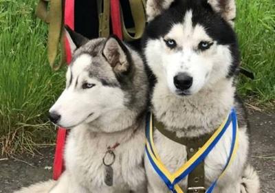 У Чернівцях невідомі вбили двох собак: власниця обіцяє винагороду за інформацію про злочинців