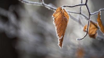 На Буковину насувається похолодання з морозами