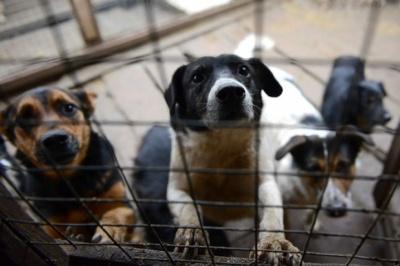 Працівники чернівецького притулку відловлюють собак на Тернопільщини