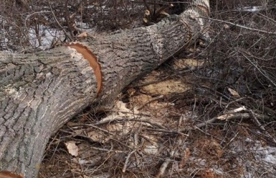 У Харківській області дерево вбило чоловіка, який намагався його спиляти