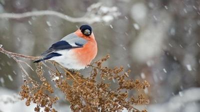 Морозно, та без опадів. Погода у Чернівцях на 20 та 21 січня