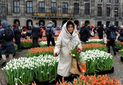 В Амстердамі роздали 200 тисяч тюльпанів