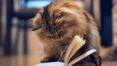 9 незвичайних причин завести кота, які підтверджені наукою