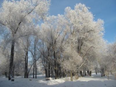 На Буковині справжня зима - мороз навіть удень
