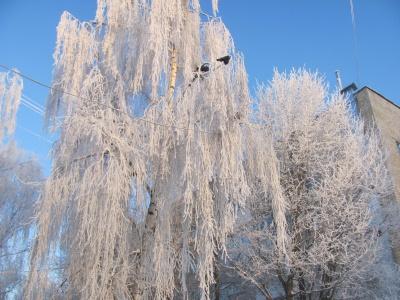 У Чернівцях зафіксовано 20-градусний мороз