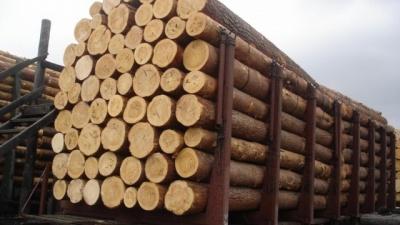 Торік експорт лісу через Буковину зменшився втричі