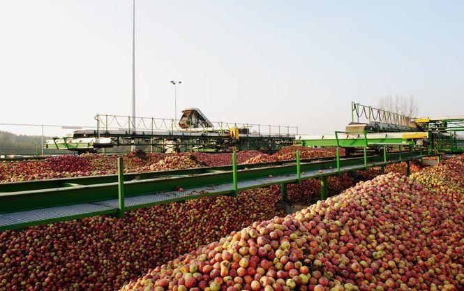 Експорт українських яблук в Євросоюз виріс в9 разів