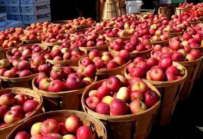 Україна цього року збере рекордний урожай яблук, – прогноз