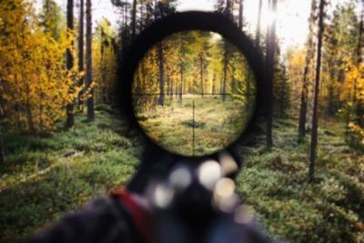 На Буковині браконьєра оштрафували за впольованого кабана