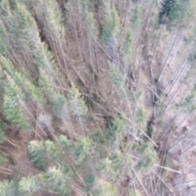 На Буковині лише в одному господарстві буревії за зиму знищили 300 га лісів