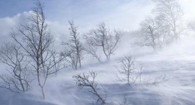 Лютий ще поморозить: на Буковині останній місяць зими ще нагадає про себе хуртовинами
