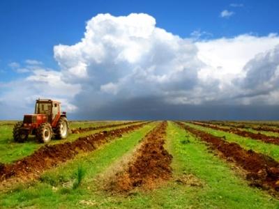Стало відомо, скільки коштуватиме земля після зняття мораторію на її продаж
