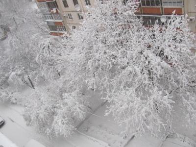 Сніг і вітер: погода на Буковині і в Чернівцях на 9 лютого