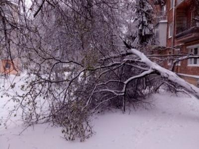 Снігова негода: у Чернівцях через падіння дерев пошкоджено 8 автомобілів