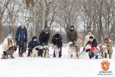 На Буковині організують змагання із собаками і катання на упряжках