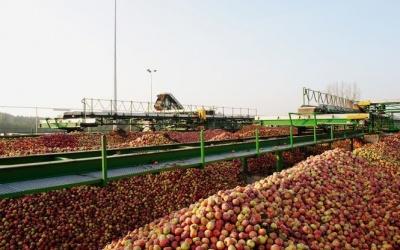 Україна в 9 разів збільшила експорт яблук в ЄС