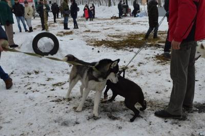 На Буковині провели змагання з канікросу (ФОТО)