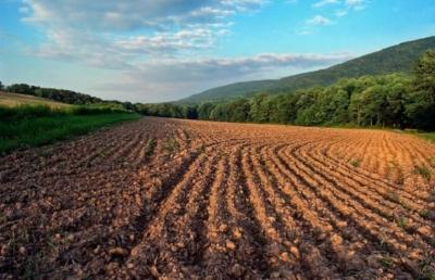 У Чернівецькій області фермерське господарство самовільно захопило земельну ділянку