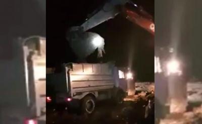 На Буковині селяни виявили нелегальний скотомогильник з понад тисячею тушок свиней