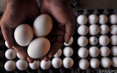 Найбільший виробник яєць в Україні вийшов на нові світові ринки