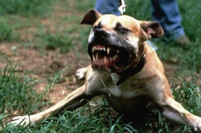 На Львівщині чоловіка загризли собаки