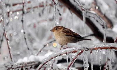 Синоптики попереджають про різке похолодання і люті морози на Буковині