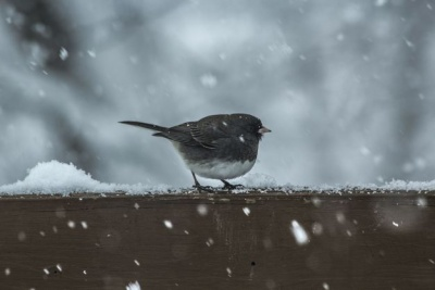 Люті морози і сніг. Синоптики розповіли про погоду на 25 лютого