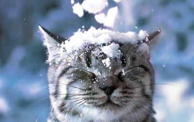 Весна ще затримається. Синоптики прогнозують на Буковині 18 градусів морозу