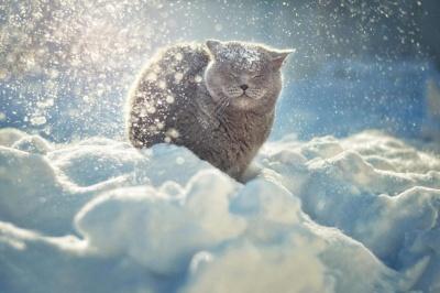 Синоптики розповіли, коли на Буковині спадуть морози