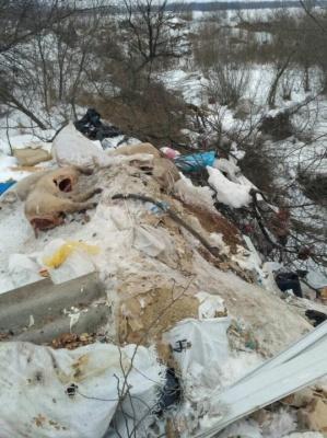 На Буковині на стихійному смітнику виявили 15 тушок свиней