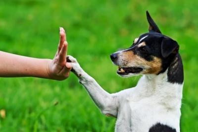 У Чернівцях безкоштовно дресуватимуть собак