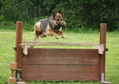 Безкоштовну дресуру собак у Чернівцях переносять на 8 березня