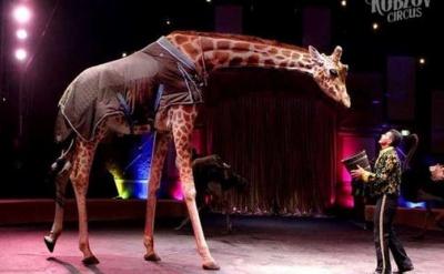 Мінприроди пропонує заборонити використання тварин у цирках