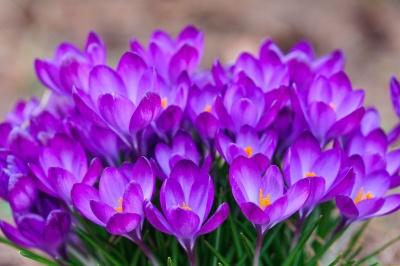 Найкращі тексти привітань з 8 березня, які сподобаються кожній жінці