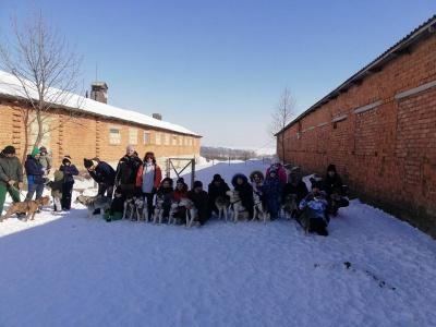У Чернівецькій області влаштували зимові прогулянки на собачих упряжках