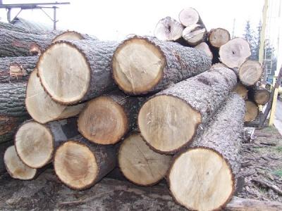 Держлісгоспи Буковини продали на аукціоні 95% виставленої деревини