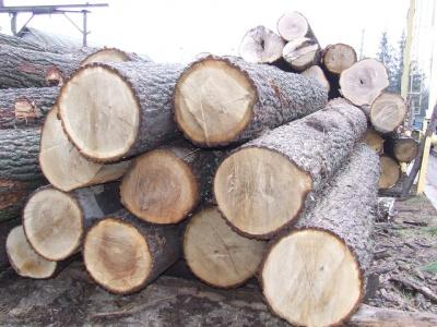 На Буковині лісгосп заплатить понад два мільйони за незаконну рубку дерев