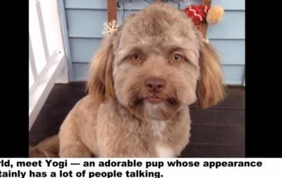 """Мережу здивував собака з """"людським обличчям"""""""