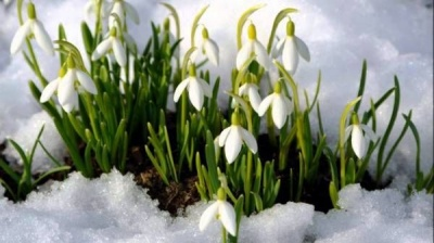 Синоптики розповіли, коли на Буковину прийде весна