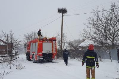 Рятувальники розповіли, як допомагали врятувати лелек від голоду на Буковині
