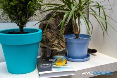 Чернівецька команда компанії AMC Bridge переїхала до нового офісу (прес-реліз)