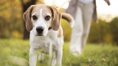 Собака допоміг американці виявити онкохворобу: деталі