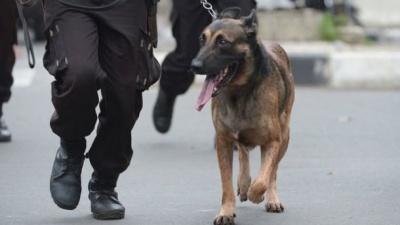 В Іспанії придумали цікавий метод, як лікувати поліцейських собак від стресу