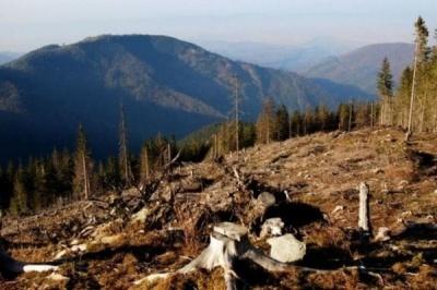 Рада ухвалила в першому читанні закон про заборону рубок на гірських схилах Карпат